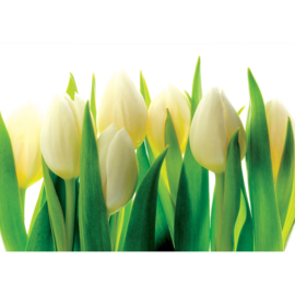 Fotobehang poster 1690 bloemen planten tulpen geel