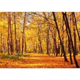 Herfst bos vlies fotobehang 400 x 280