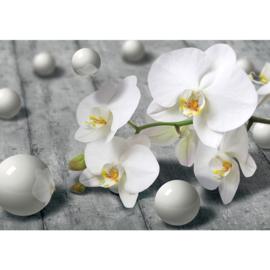 Fotobehang poster 1882 bloemen witte orchidee met parels