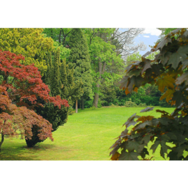 Fotobehang poster 2305 bomen planten groen gras bladeren