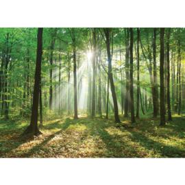 Fotobehang poster 3285 bomen zon groen bos