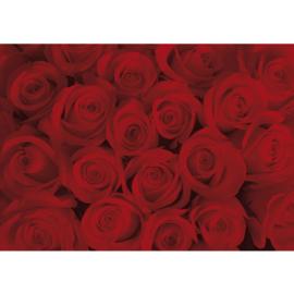 Fotobehang poster 0726 rozen roos rood bloemen