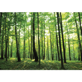 Fotobehang poster 0528 bomen bos groen natuur