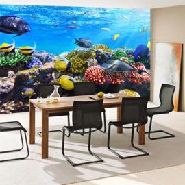 Fotobehang poster 0105 onderwater koraal rif vissen