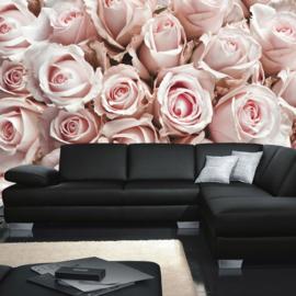 Fotobehang poster 0189 bloemen rozen roos licht roze wit