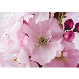 Fotobehang poster 1112 bloemen bloesem roze