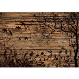 Fotobehang poster 2050 bruin hout planken boom gras vogels