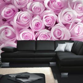 Fotoebehang poster 0186 bloemen rozen roos licht roze paars