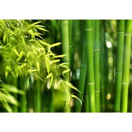 Fotobehang poster 0018 bamboo bos bamboe natuur groen jungle