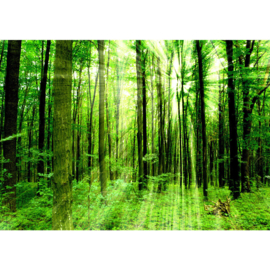 Fotobehang poster 0061 bomen bos groen natuur