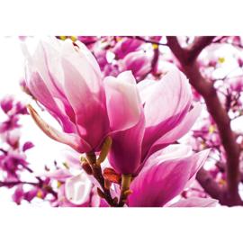 Fotobehang poster 1203 bloemen magnolia roze