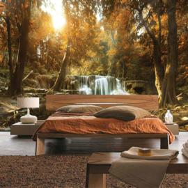 Fotobehang poster 3340 bomen bos waterval herfst natuur