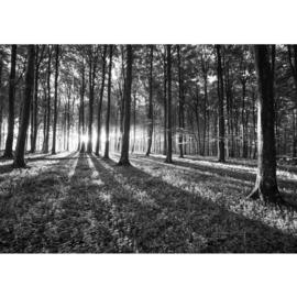 Fotobehang poster 0642 bomen gras planten grijs