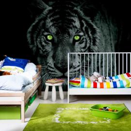 Fotobehang poster 0425 dieren tijger met groene ogen