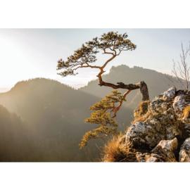 Fotobehang poster 3353 landschap bergen boom
