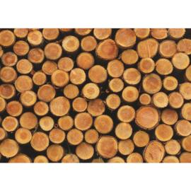 Fotobehang poster 1716 hout boomstammen