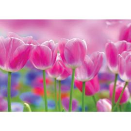Fotobehang poster 3562 bloemen tulpen roze