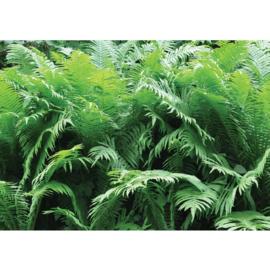 Fotobehang poster 3224 bladeren planten groen