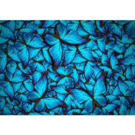 Fotobehang poster 0192 vlinders dieren blauw