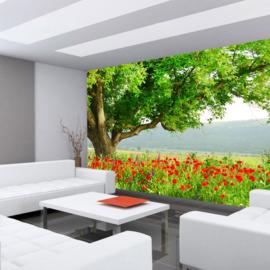 Fotobehang poster 0090 bloemen papavervelden rood