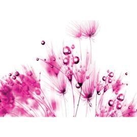 Fotobehang poster 0795 bloemen planten roze wit