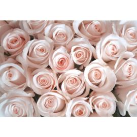 Fotobehang poster 0185 bloemen rozen roze