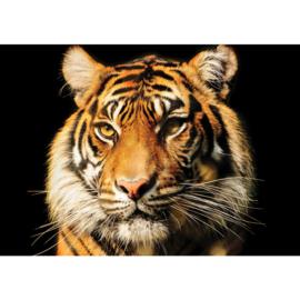 Fotobehang poster 2207 dieren tijger kop