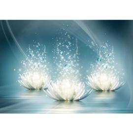 Fotobehang poster 2692 bloemen waterlelie bubbels bellen