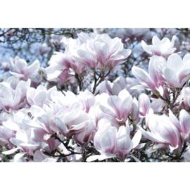 Fotobehang poster 1696 bloemen natuur wit roze