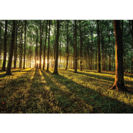 Fotobehang poster 0638 bos natuur bomen zon