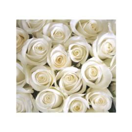 Fotobehang poster 0184 bloemen rozen roos wit