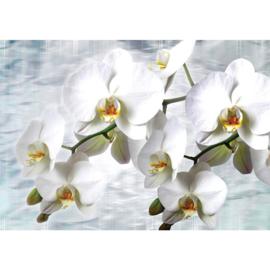 Fotobehang poster 1827 orchidee wit bloemen planten