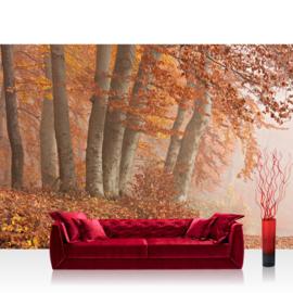 Fotobehang poster 0255 bos nevel bomen herfst mist