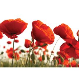 Fotobehang poster 2337 bloemen klaproos rood