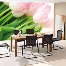 Fotobehang poster 1110 bloemen tulpen roze