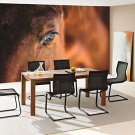 Fotobehang poster 1324 dieren paarden bruin oog paard