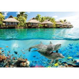 Fotobehang poster 1888 dieren dolfijn bali onderwaterwereld