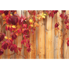 Fotobehang 532 hout blad rood 400 x 280