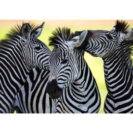 Fotobehang poster 2555 dieren zebra paarden safari