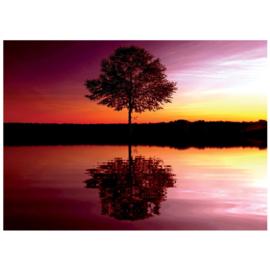 Fotobehang poster 1102 natuur bomen reflectie in water weerspiegeling avondrood