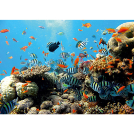 Fotobehang poster 1922 dieren vissen koraalrif vis