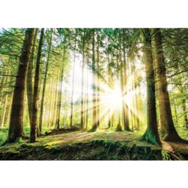 Fotobehang poster 3256 bomen bos groen zon