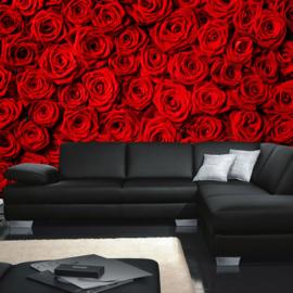 Fotobehang poster 0190 bloemen rozen roos rood