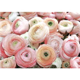 Fotobehang poster 0677 rozen roze bloemen