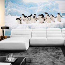 Fotobehang poster 2015 pinguin dieren ijs antartica pool