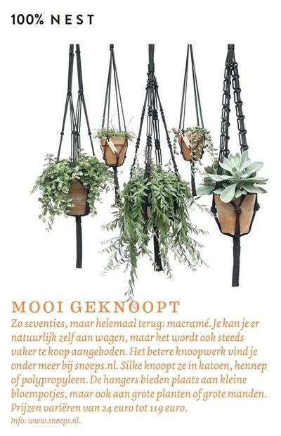 nest (Belgie)