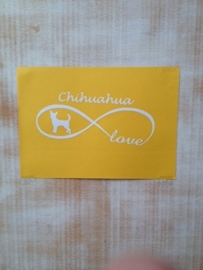 infinity chihuahua