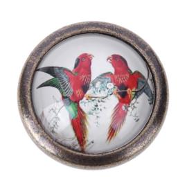 Papegaaien ladeknop