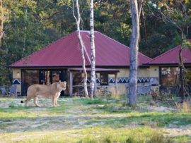 Accommodation: Beekse Bergen Safari Resort & Holiday Park