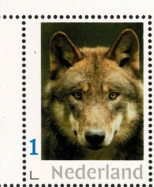 2021. De wolf is terug in Nederland